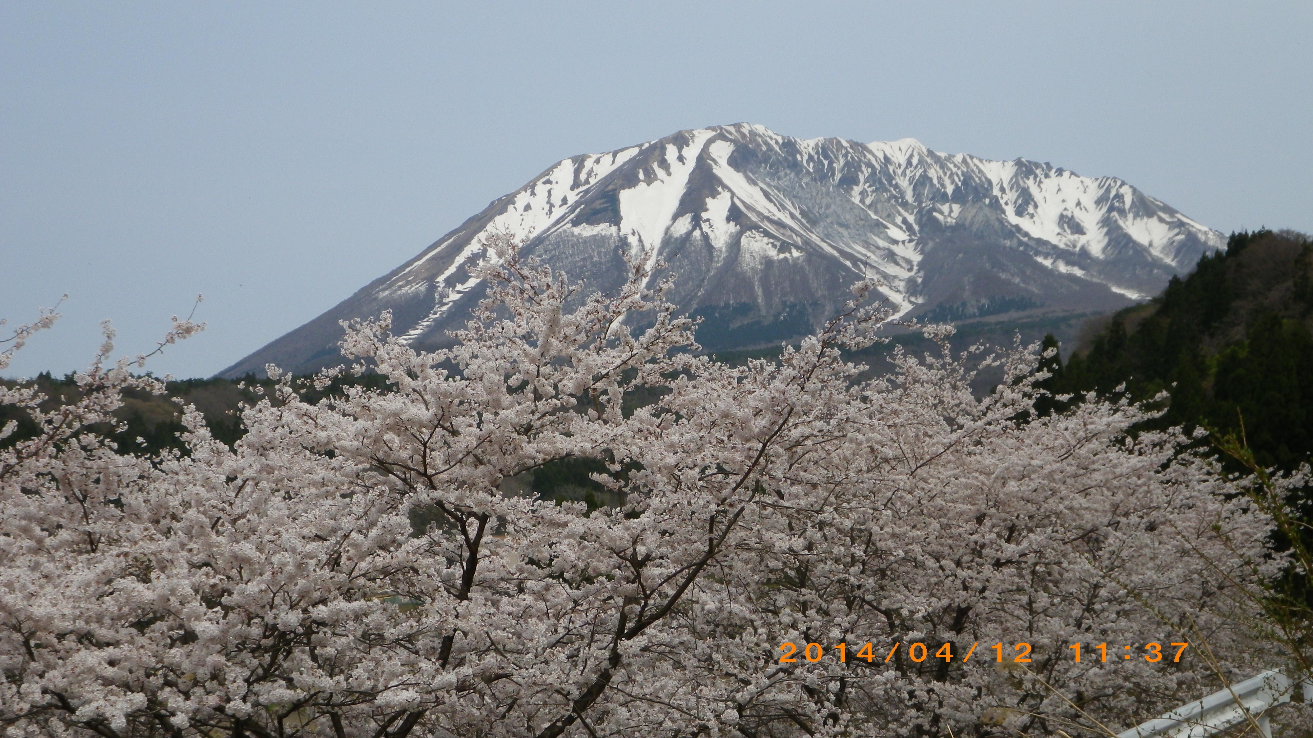 大山-残雪と桜